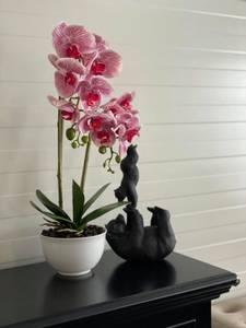 Bilde av orkide rosa m/hvit potte