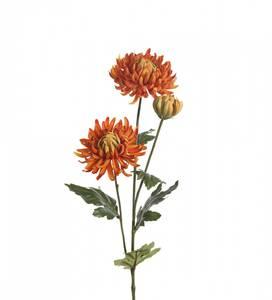 Bilde av Chrysanthemum 60 cm