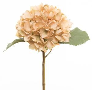 Bilde av Blomst hortensia krem 50cm