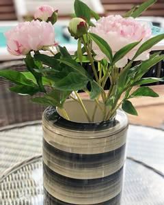 Bilde av Pion i potte rosa H:50cm