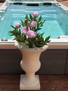 Bilde av Piontre rosa  H:70 cm