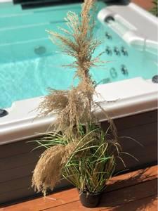 Bilde av Strå plante i potte