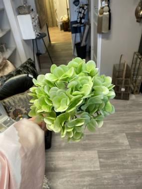 Hortensiablomst grønn