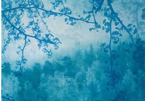 Bilde av Blå skog av Monica Egeli