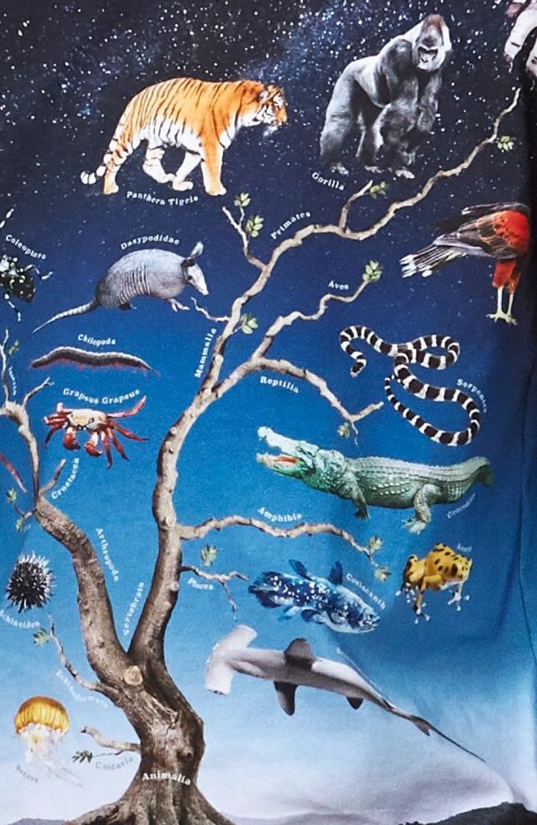 genser reif animal tree
