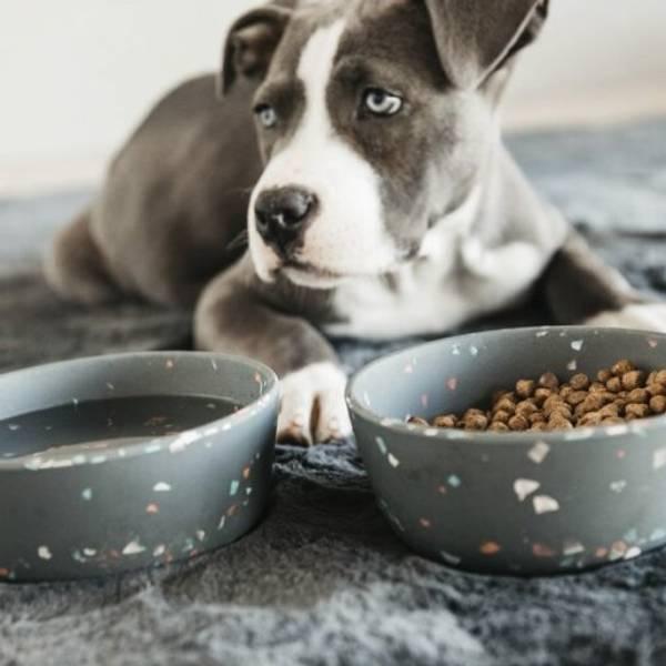 Bilde av Kentucky Dog Bowl Terazzo medium