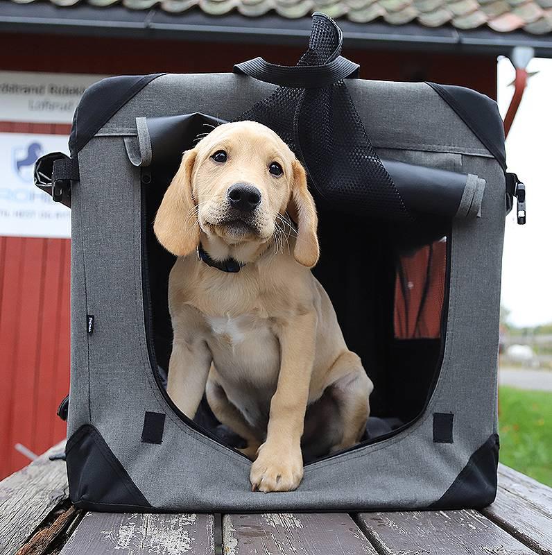 Utstyr til hund