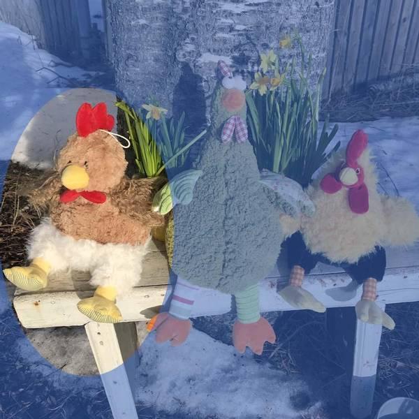 Bilde av Høne sittende brun