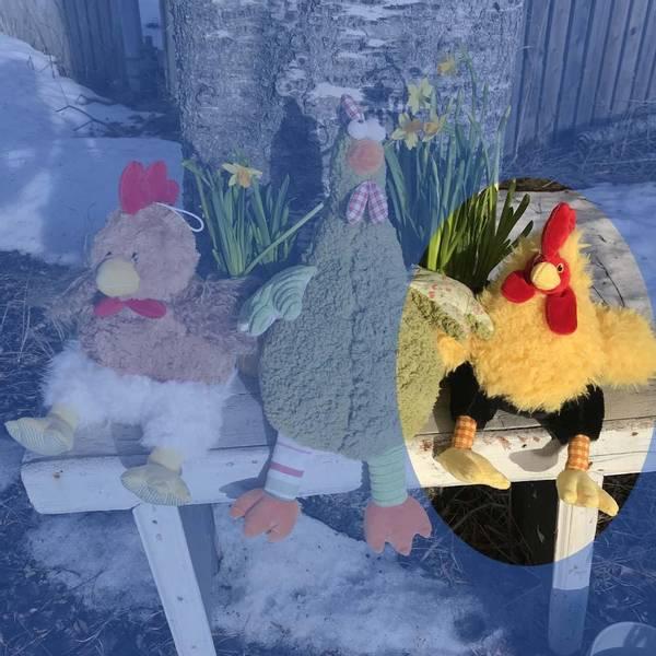 Bilde av Høne sittende gul