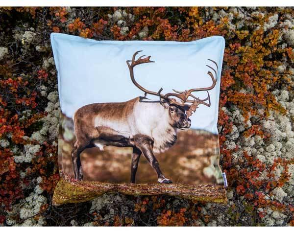 Bilde av Velourpute med fyll, reinsdyr, `Blikk i naturen`