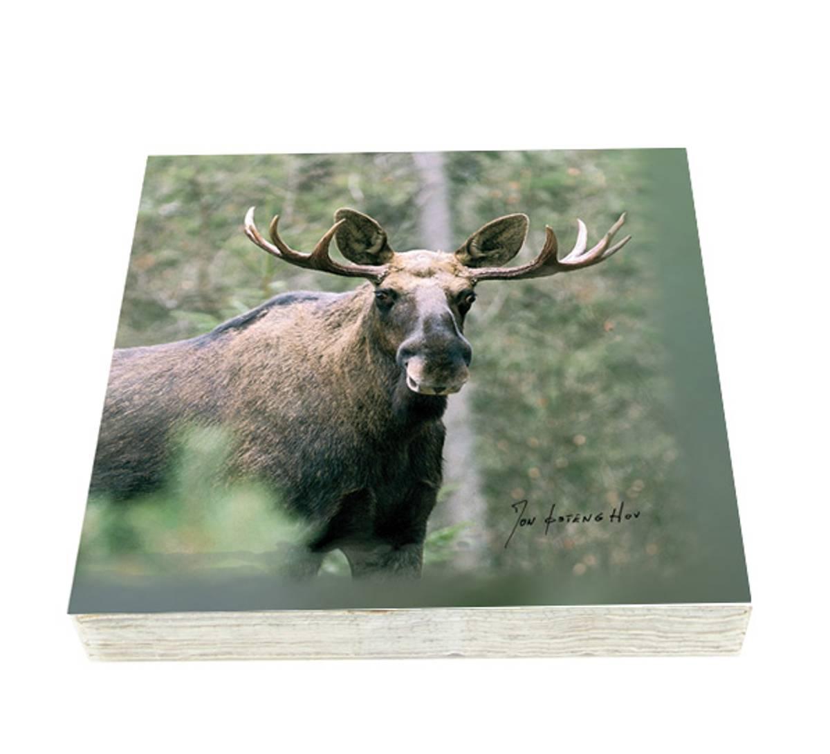 Villmarksserien Servietter med elg, rype, reinsdyr og tiur