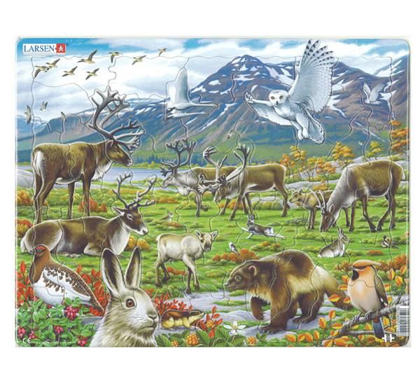 Bilde av Puslespill  Norsk fauna - reinsdyr  50 brikker