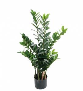 Bilde av Mr. Plant  - Zamifolia 90 cm