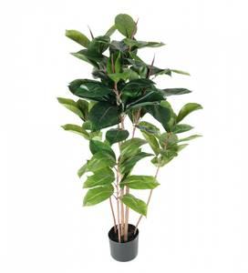 Bilde av Mr. Plant - Fikus Robusta 120 cm