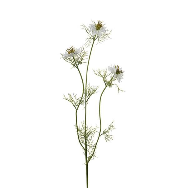 Mr Plant - Nigella 60 cm