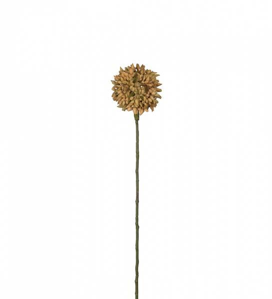 Mr Plant - Allium 45 cm