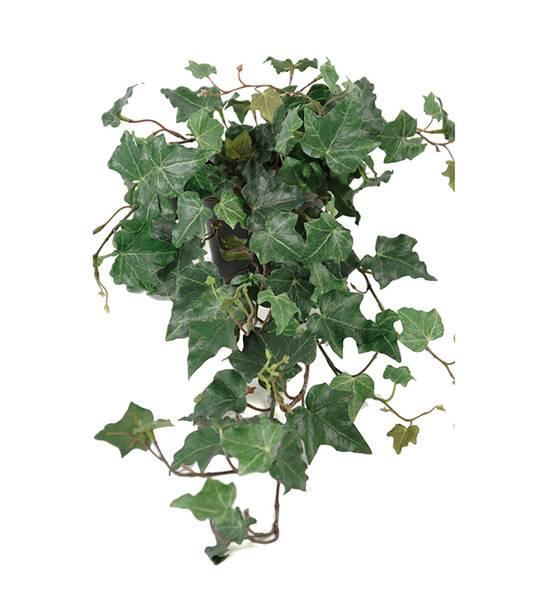 Mr Plant - Eføy 55 cm