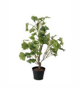 Bilde av Mr Plant - Ginkgo 45cm