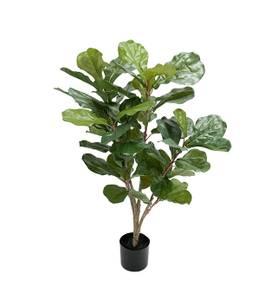 Bilde av Mr Plant - Fiolfikus 90 cm