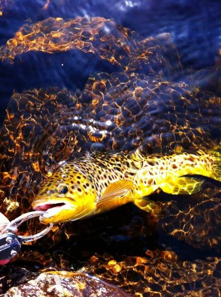 Bilde av BoC FishGrip