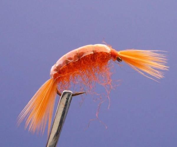 Bilde av Tangloppe Mysis Orange