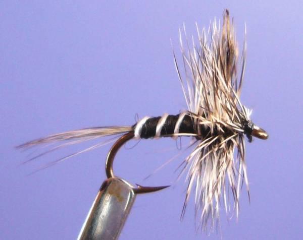Bilde av Mosquito