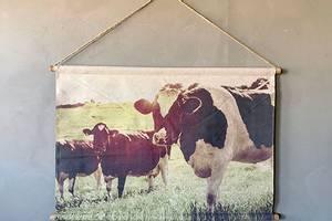 Bilde av Plansje kuer 94x64cm