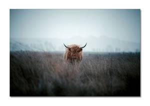 Bilde av Power of nature (50x70 bilde Plexiglass)