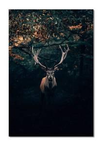 Bilde av Deer I´m the king (80x120 bilde Plexiglass)