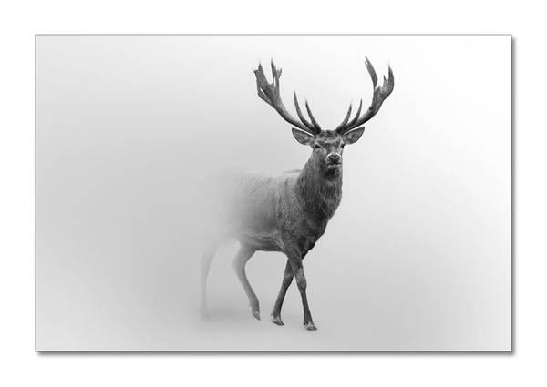 Deer It´s foggy (80x120 bilde Plexiglass)