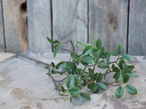 Bilde av Grønn gren med blader