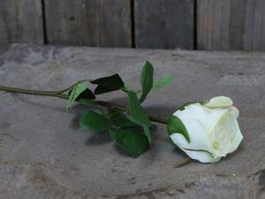 Bilde av Rose hvit 40cm
