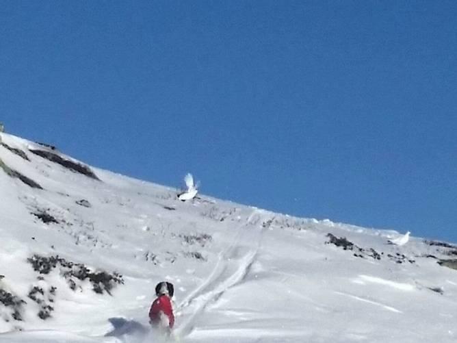 Bilde av Ro i oppflukt kurs i fjellet!