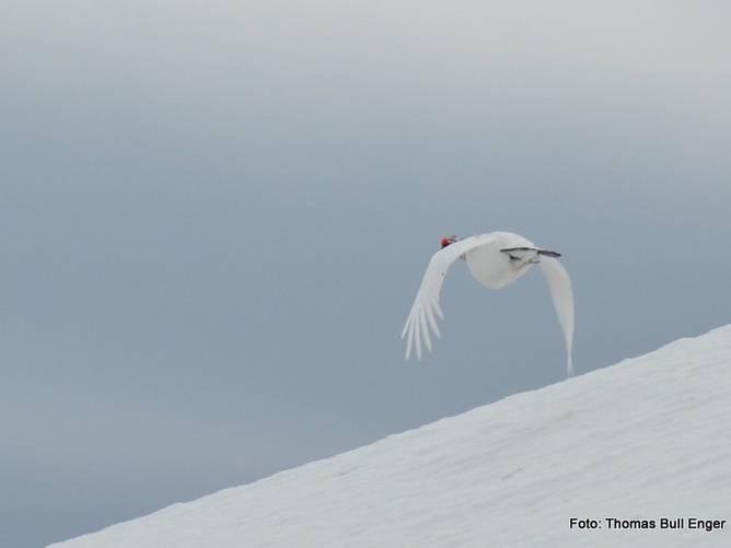 Bilde av Fugletrening