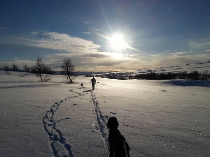 Bilde av Føring av hund i fjellet!