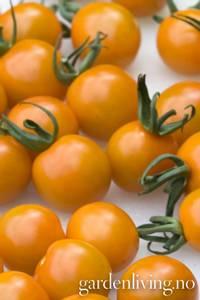 Bilde av Tomat, Drivhus- cocktail 'Orange Paruche' F1