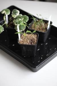 Bilde av Plantebrett svart, torvbrikett