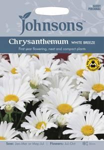 Bilde av Prestekrage White Breeze' - Leucanthemum vulgare