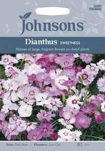 Bilde av Nellik, Fjær- 'Sweetness' - Dianthus plumarius