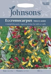 Bilde av Fakkelranke 'Tresco Mixed' - Eccremocarpus scaber