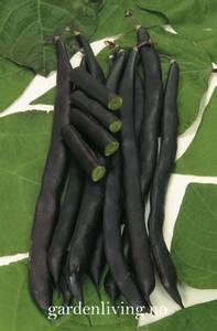 Bilde av Bønne, Stang- 'Blauhilde' - Phaesolus vulgaris