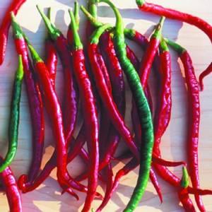 Bilde av Chilipepper 'Joe's Long Cayenne' - Capsicum annuum