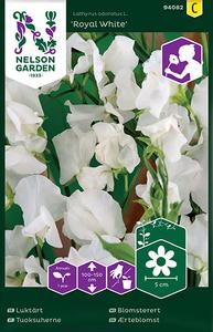 Bilde av Blomsterert 'Royal White' - Lathyrus odoratus