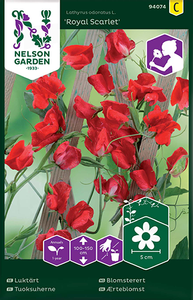 Bilde av Blomsterert 'Royal Scarlet' - Lathyrus odoratus