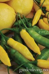 Bilde av Chilipepper 'Lemon' Drop' - Capsicum annuum