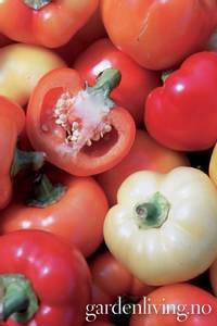 Bilde av Chili 'Alma Paprika' - Capsicum annuum