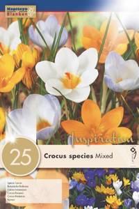 Bilde av Småblomstret krokus i blanding - Crocus - 25 stk