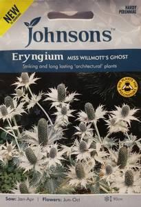Bilde av Stikle, Kjempe- 'Miss Willmotts Ghost' - Eryngium giganteum