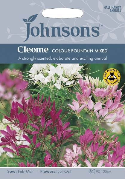 Paradisspinner 'Colour Fountain Mixed' - Cleome spinosa