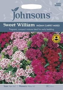 Bilde av Nellik, busk 'Indian Carpet Mixed' - Dianthus barbatus
